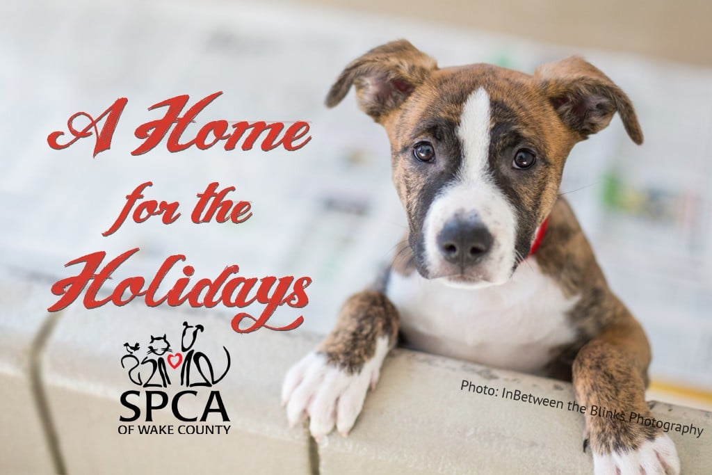 Black friday small business saturday and giving tuesday at the spca black friday small business saturday and giving tuesday at the spca of wake county m4hsunfo