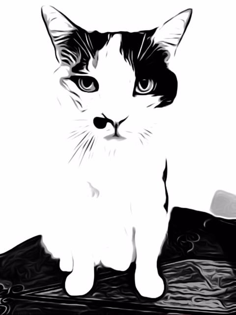 cat-picl