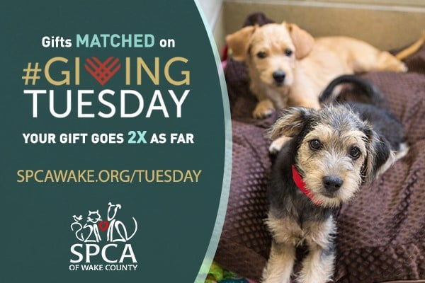 SPCA Giving Tuesday