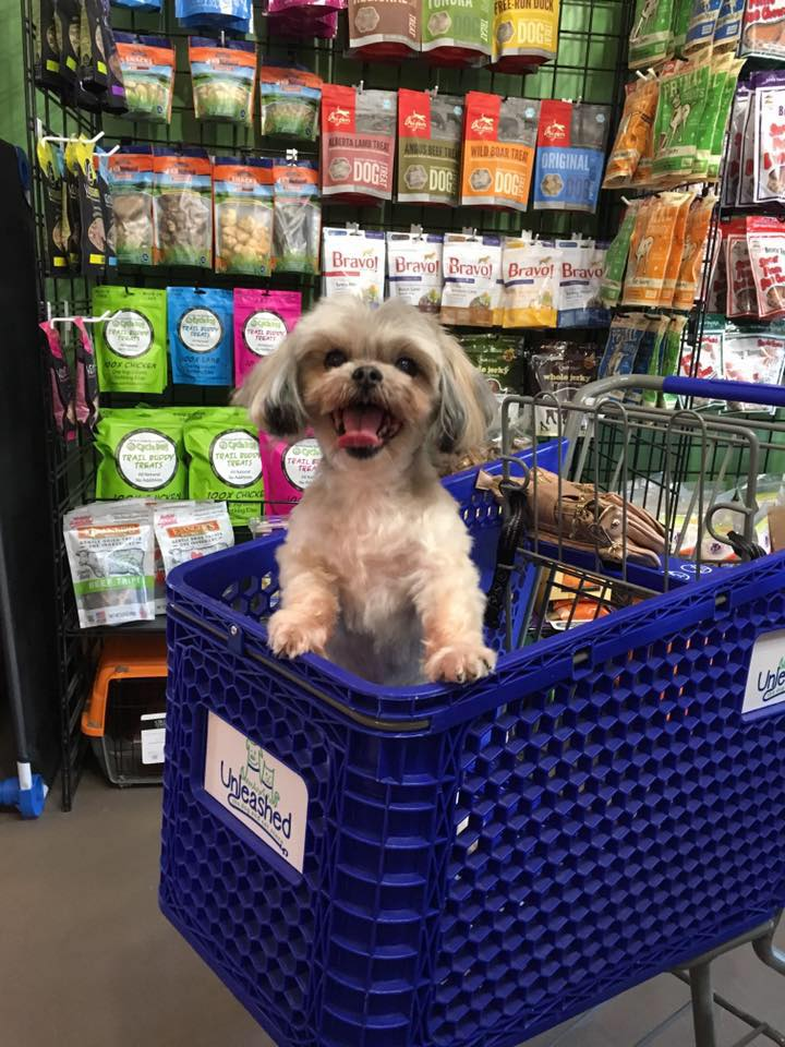 dog in shopping cart at unleashed