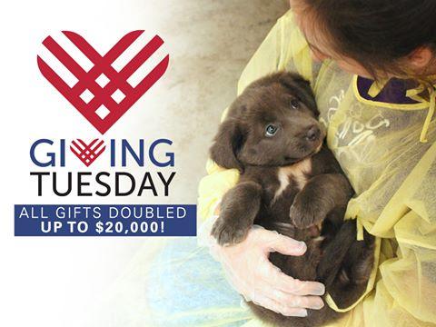 SPCA Wake - Giving Tuesday